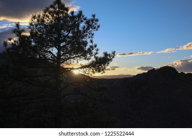 Views of sunset through pine tree silhouette.