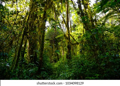 Views of tropical forest captured in the morning