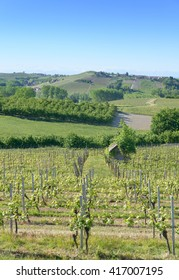 Views of the wine producing area Barbaresco in the region Piedmont in Italy