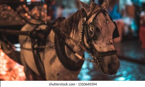 vigan kalesa horse