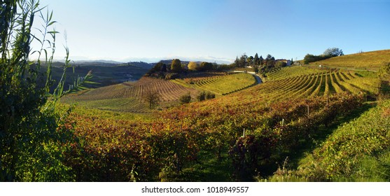 Vigneti in  Monferrato Wineyards in Monferrato