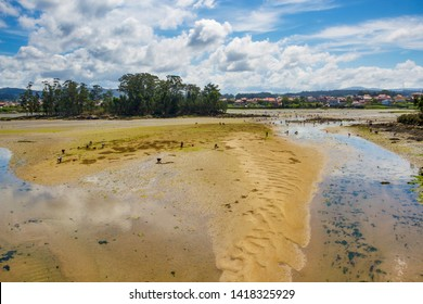 Vilanova de Arousa estuary and Ansuina island at low tide with shellfish fishermen catching clams and cockles on the sandbars