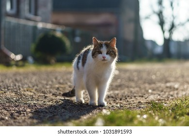 A village cat in the courtyard in the backlight.