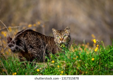 Village Cat looking straight ahead in a field. Stock image.