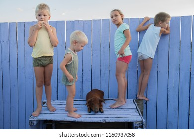 Village children play in courtyard of rural house with red pig of Duroc breed. Kids look out on guard with lilac wooden fence. Boys and girl are happy together on vacation in countryside