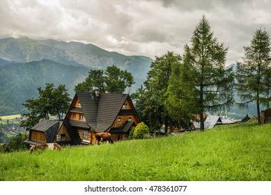 Village cottage and cows on green grass field, Tatry mountains at background, Zakopane, Poland