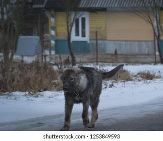 village dog close up