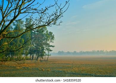 A village in foggy morning, near Sundarbans delta, West Bengal.