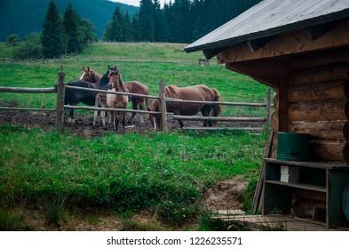 village of hourses