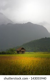 Village hut in valley field in Lac Village, Mai Chau, Vietnam