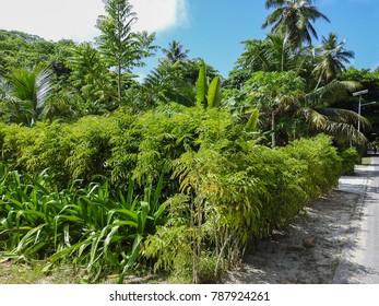 Village. La Digue island nature. Seychelles, Africa