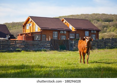 Village landscape. Cow on the background of wooden houses