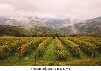 Village lifestyle, season of raspberries, farm in mountains.