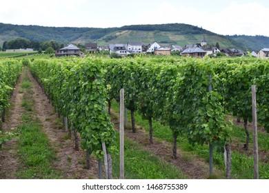 village Metternich in Moselle valley