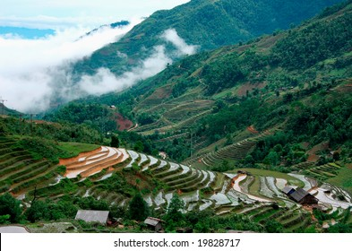 Village and Rice field curves