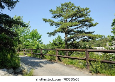 A Village Road with iron railing with pines and other shrubbery lining on the sides.