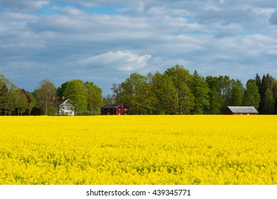 Village in southern Smaland, Sweden, behind blooming canola fields in spring.