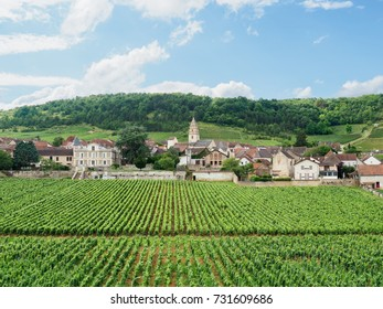 Village of St-Aubin behind some of the grape vines for which it is famous on the Cote d'Or of France's Burgundy region.