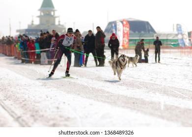 The village of Troitskoe, Sakhalin, Russia, February 17, 2019: Snow Drive-2019 Dog Sled Championship in Sakhalin Region.