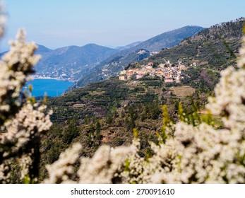 Village of Volastra in Cinque Terre, Italy