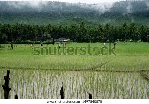 Villagers walk through paddy field in a remote village of Karnataka, India.