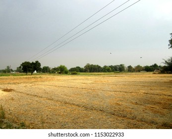 villages of India are its main beauty.Some of wheat and suger cane crops are given here.