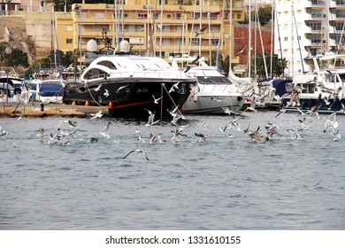 VILLAJOYOSA, SPAIN – MARCH 06, 2019. Seagulls catching the fish that are rejected by the fishermen that enter the port of Villajoyosa in Spain.