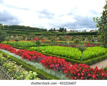 VILLANDRY, FRANCE - SEPTEMBER 4, 2015: Garden of Chateau de Villandry, a castle-palace located in Villandry, in department of Indre-et-Loire, France.
