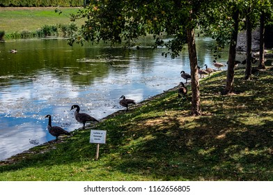 VILLARCEAUX, FRANCE - AUGUST 22ND, 2018. Pond and ducks in the field of Villarceaux with Chaussy, village of French Vexin in the Val-d'Oise.