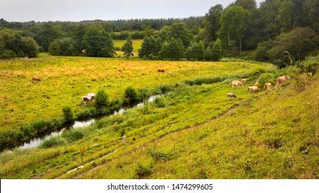 Villestrup River valley in Jylland, Denmark