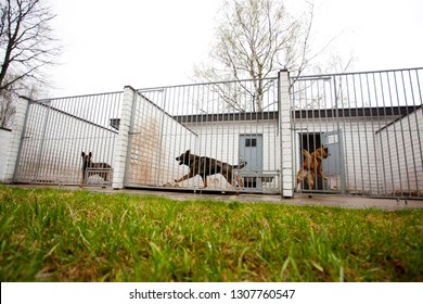 Vilnius/Lithuania October 29, 2014 At the Canine centre. Police dogs (German shepherd) sitting in the aviary.