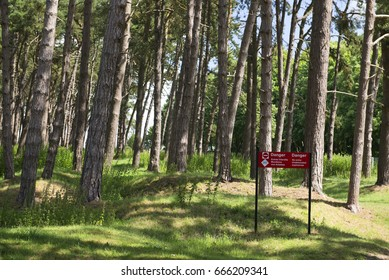Vimy Ridge, France. Sheep graze on the craters and regrown woods on the World War 1 battleground, Vimy Ridge, France. Unexploded ordnance (UXO) remains a constant danger