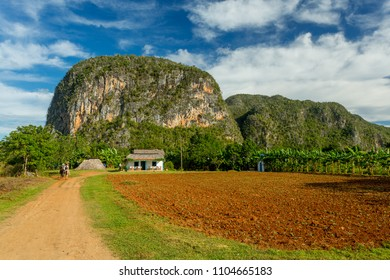 Vinales, Cuba. Horse riding and tobacco fields