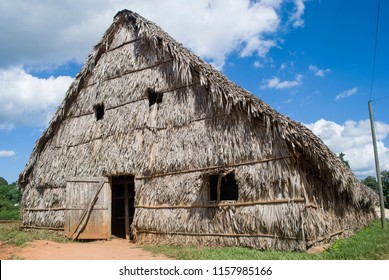 Vinales / Cuba - November 27, 2017: Cigar factory Cuba. Hut made of palm leaves. Manual production of Cuban cigars. Cultivation of Tobacco in Vinales.