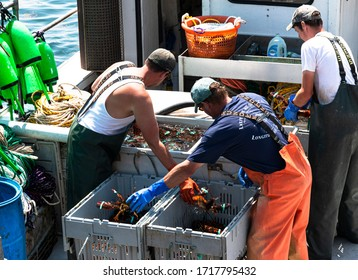 Vinalhaven, Maine, USA - 4 August 2017: Lobster fishermen seperating fresh caught lobsters into seperate bins to be sold at market.