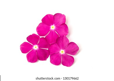 Small flowers perennials images stock photos vectors shutterstock vinca rosea flower catharanthus roseus madagascar periwinkle on white background mightylinksfo