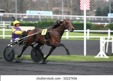 VINCENNES - FRANCE - JAN 28 :  Prix d'Amérique, Vincennes, 2007 the winner, Offshore Dream http://www.prix-amerique.com/ http://www.pbase.com/isogood/prix_amerique_2007&page=all