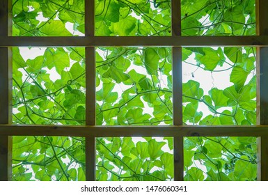 Vine decoration on the rooftop ceiling outdoor garden with the light sky at the background.