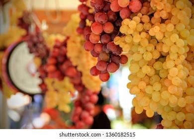 vine grap market