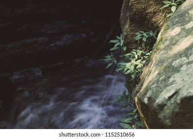 A vine growing in the gap between two large rocks beside a small waterfall.