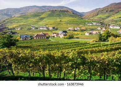 Vine Hills taken in Wachau, Lower Austria
