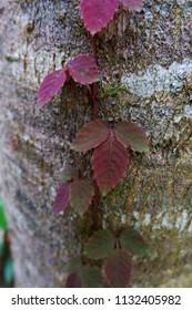 vine on bark tree