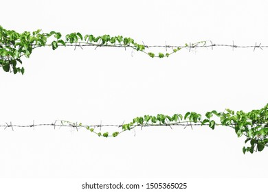 vine on wire background white