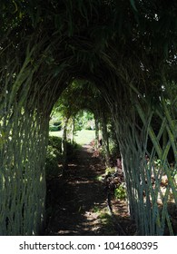 Vine tunnel in the garden