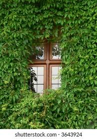 Vine window