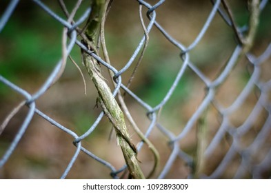 vine woven in fence - landscape