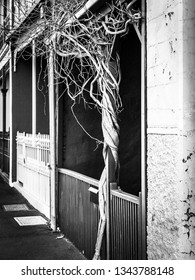 A vine is wrapped around a wooden fence post of a inner city townhouse