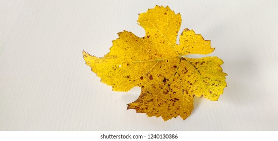 Vine yellow leaf.
