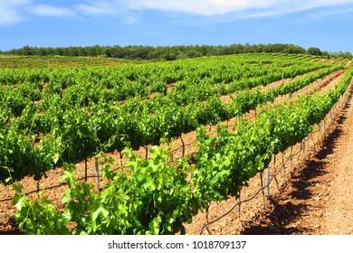 vine-growing fields at Teruel, Aragon, Spain