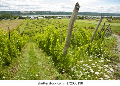 Vinery in Quebec with St. Lawrence Valley in the background, Canada